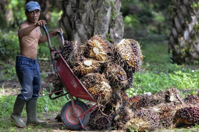 Hak Buruh Perkebunan Sawit Atas Kesehatan  di Masa Pandemi Covid-19: Terpinggirkan Akibat Isolasi?
